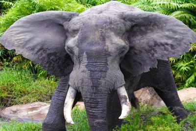 shimba-hills-nationa-reserve-kenya-day-tours